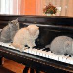 cat-1248010_640